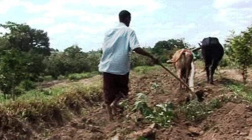 Africký zemědělec