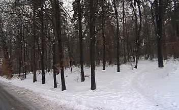 Lesní porost u Dobré Vody