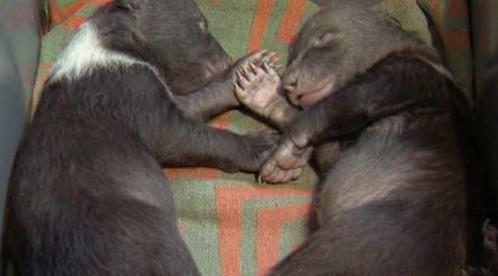 Medvědí mimina