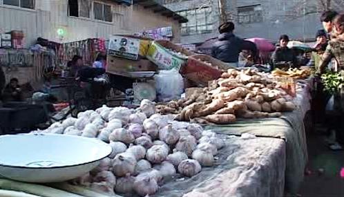 Prodej česneku
