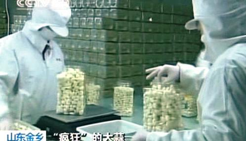 Zpracování česneku