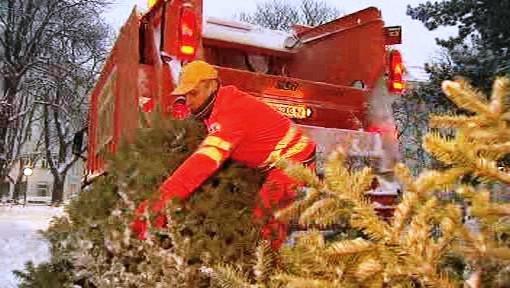 Odklízení vánočních stromků