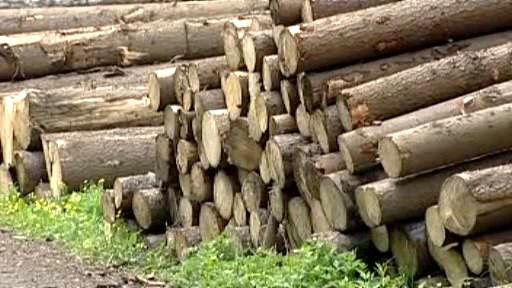 Pokácené stromy