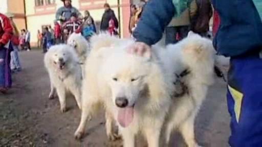 Den severských psů