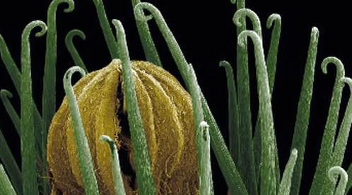 Detailní snímek rostliny