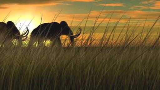 Tažení mamutů