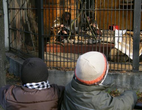Neandrtálci v zoo ve Varšavě