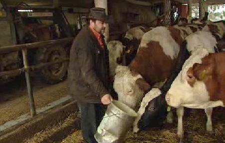 Zemědělec a krávy