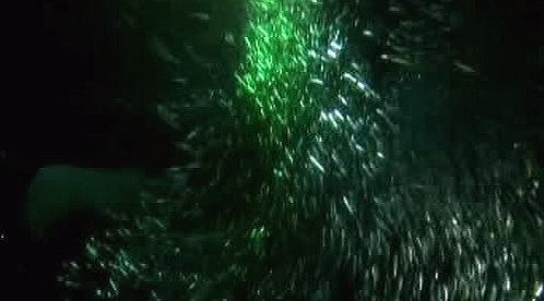 Vánoční strom ze sardinek
