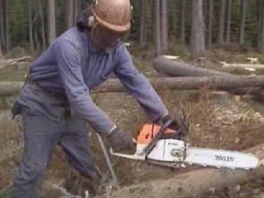 Lesní dělník