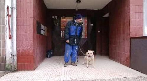 Majitel s křížencem pitbulla