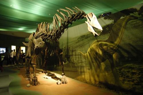 Kostra dinosaura Amargasaura