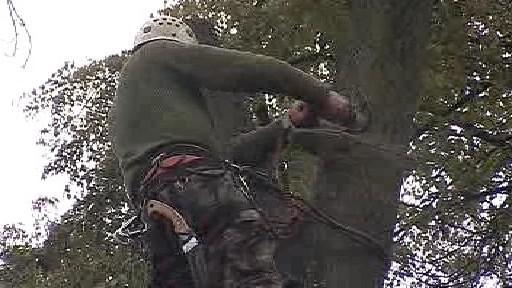 Pracovník prořezává nemocný strom