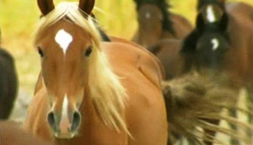 Mustangové