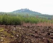 Vymýcený les