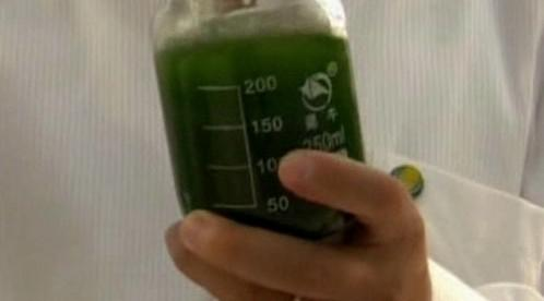 Biopalivo z řas