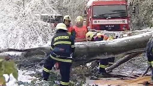 Odstraňování spadaných stromů