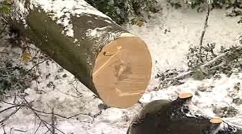 Strom spadl pod tíhou sněhu