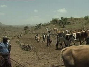 Obdělávání půdy v Africe