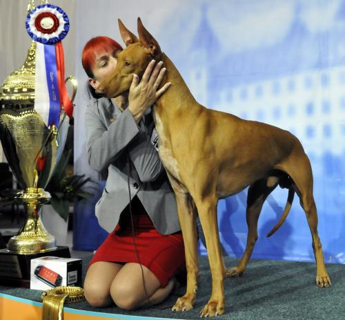 Vítěz soutěže psí krásy s majitelkou Jenny Hallovou