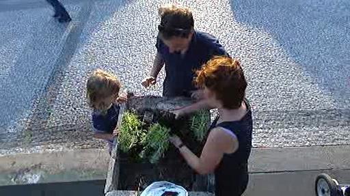 Sázení zeleně v pražských ulicích