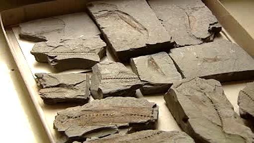 Zkameněliny ryb