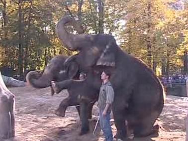 Sloni v Liberci