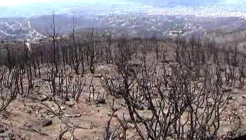 Spálený les u Atén