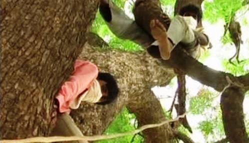 Pijáci musí v Indii za trest sedět na stromě