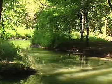 Meandry na potoku Botič