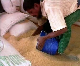 Dělník balící rýži