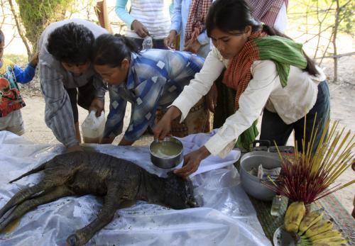 Kambodžané oplakávají svaté tele