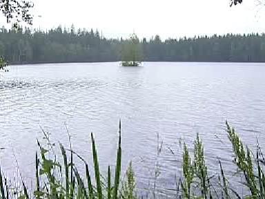 Jeden z rybníků v lokalitě osady Kladská