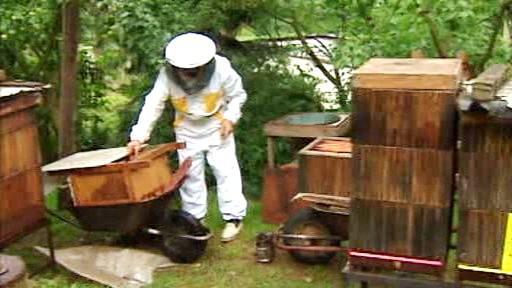 Včelař ošetřuje plástve