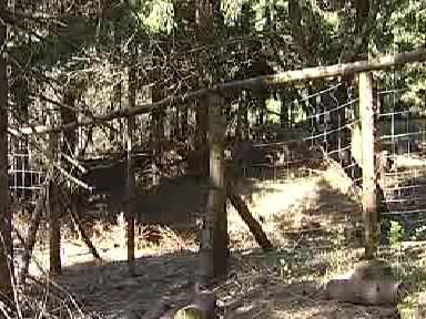 Oplocený pozemek se sazenicemi stromků