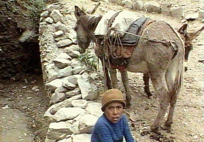 Oslíci pomohou v Afghánistánu s volebními lístky