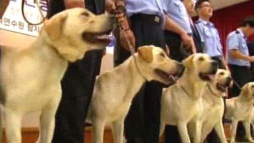První naklonovaní služební psi