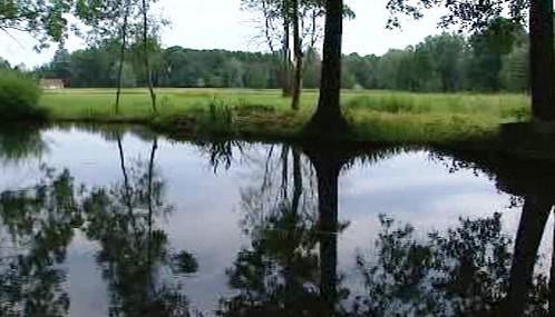 Sprévský les