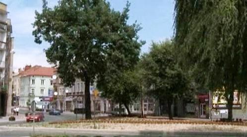 Strom, který nechal vysadit Adolf Hitler