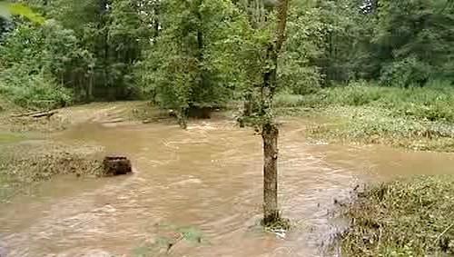 Zaplavený les