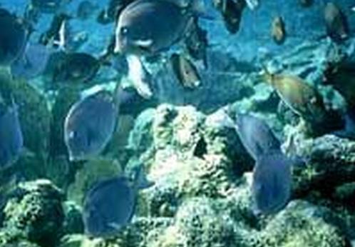Korálový útes ve vodách Belize