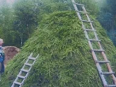 Uhlíři obkládají milíř čerstvými větvemi