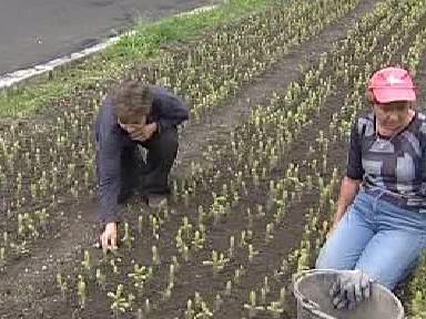 Pracovníci vysazují sazenice stromků