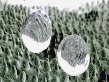 Nanosvět
