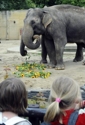 Slonice Gulab a Shanti slaví narozeniny