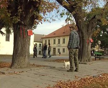 Alej v centru města Písek