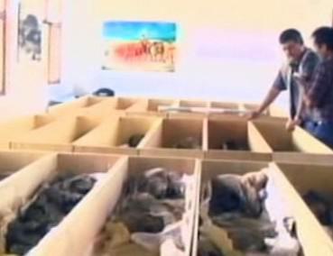Mumie nalezené v Peru