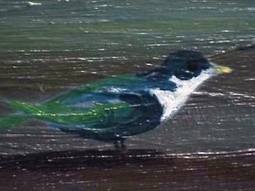 Detail obrazu