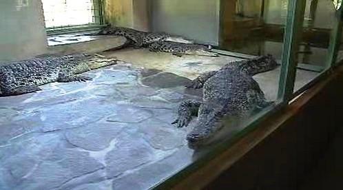Krokodýlí farma