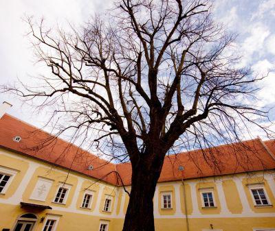 Lindenhof v Raabsu